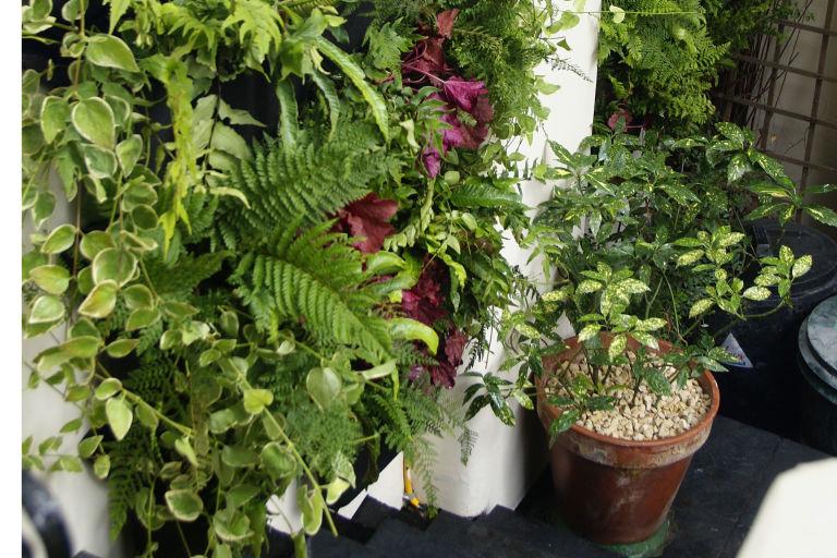 A Living Wall planter