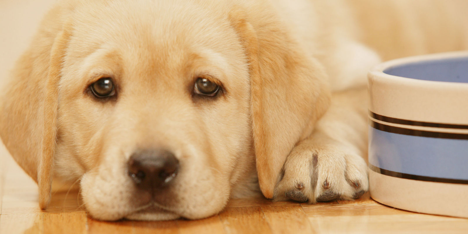 This Is How Your Bad Mood Can Affect Your Dog
