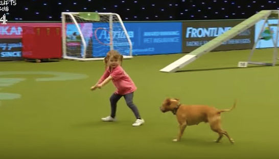 This adorable video of a young girl and her dog competing at Crufts will make your day